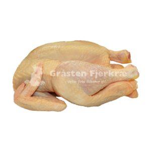 gf-kylling-øko-frilands-kylling-engros-min