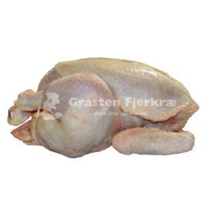 gf-kylling-hanekylling-engros-min