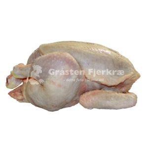 gf-kylling-landkylling-engros-min